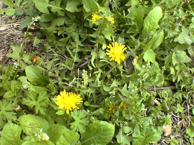 露地の花03