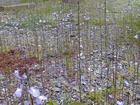 露地の花05