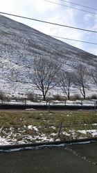 大室山 黒と白のコラボ